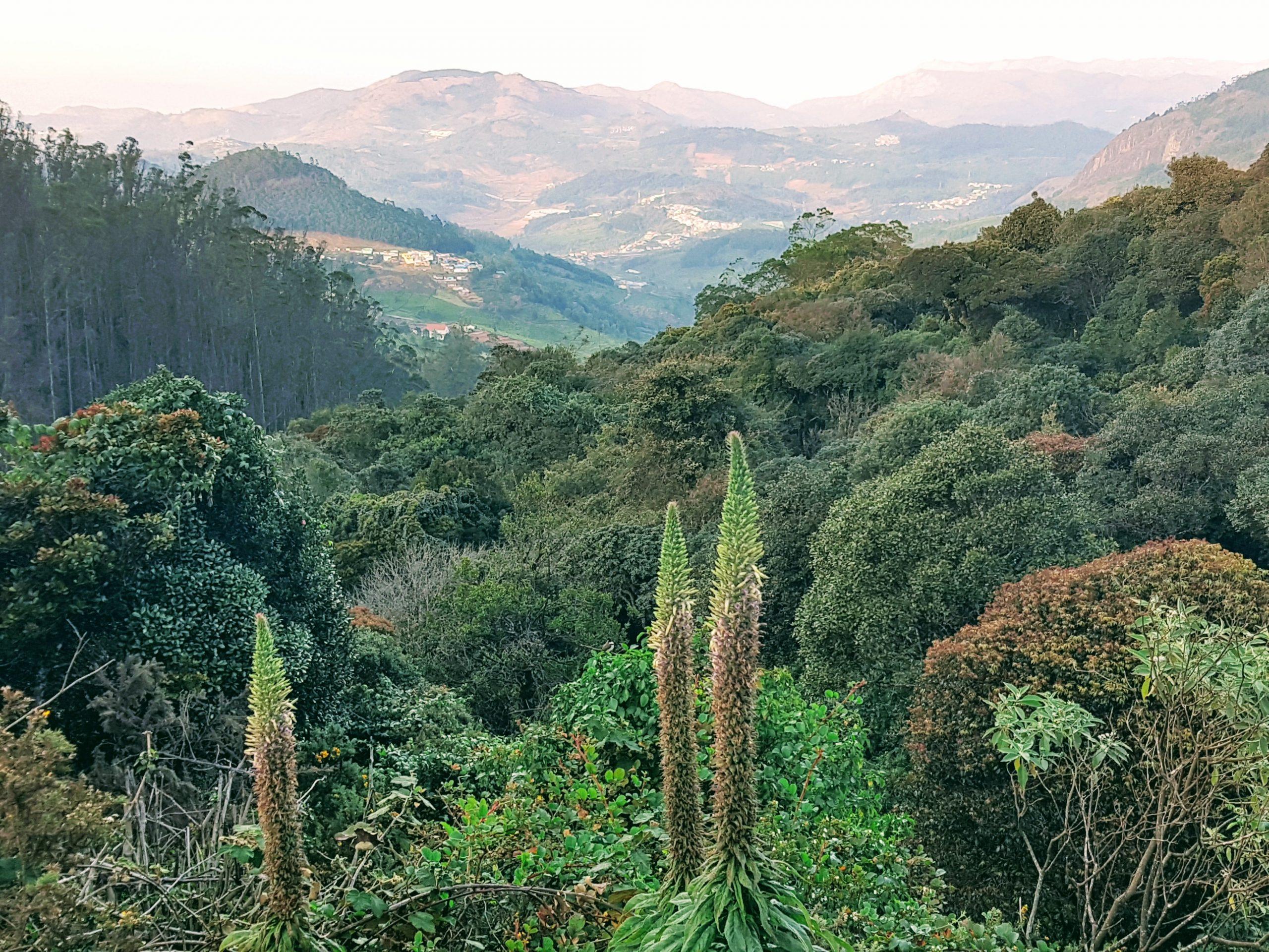 Indienreise-Ooty-Natur-Berge-Südindien