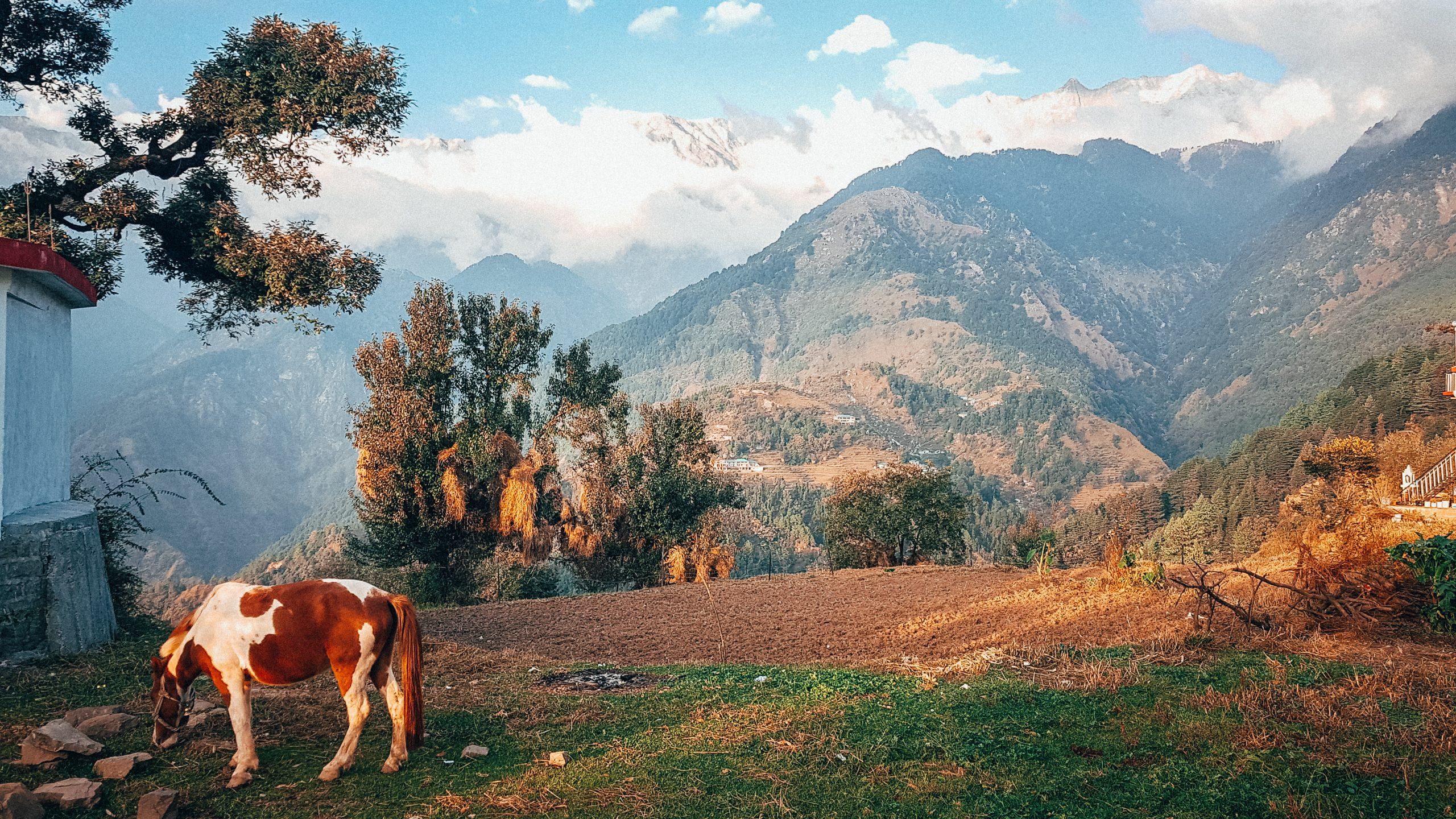 Indienreise-Naddi-Himalaya-Natur-Berge-Nordindien