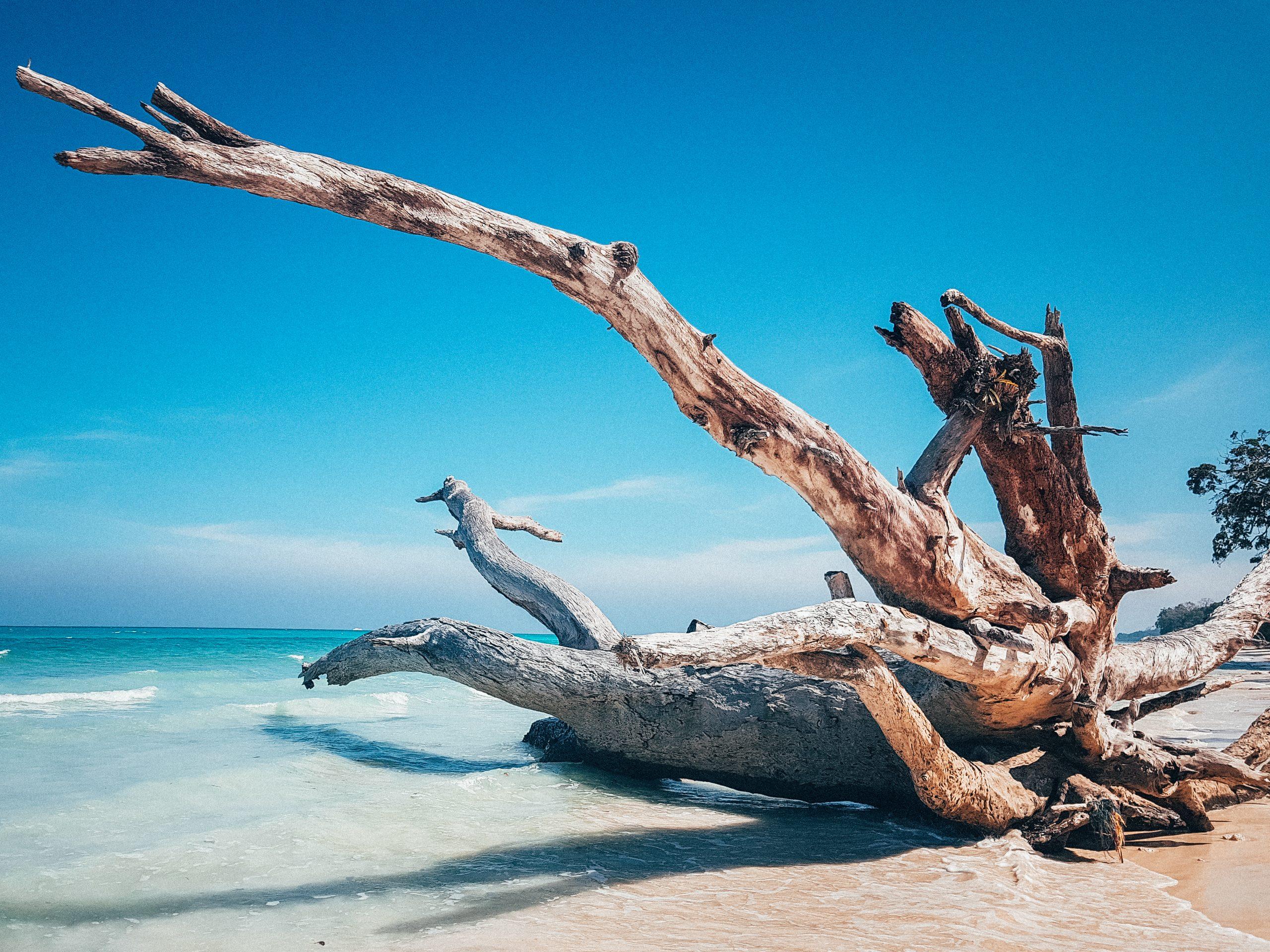 beach-travel-yoga-andamans-havelock island